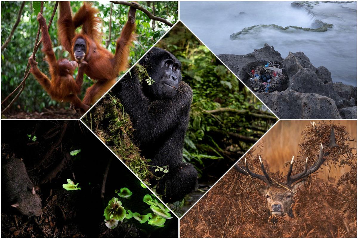 عکاسی محیط زیستی PA2F - برندگان مسابقات عکاسی محیط زیستی PA2F