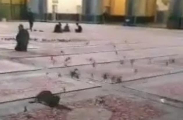 37318 301 - فیلم   شکار کبوتر توسط یک گربه در حرم امام رضا(ع)