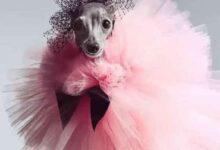 4054.8 220x150 - تیکا سگ خوش پوش در مراسم اسکار - سرگرمی