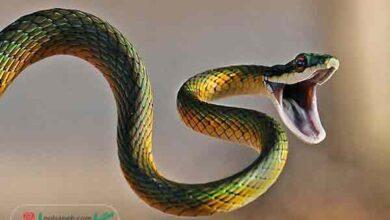 many snakes dream Interpretation 1 390x220 - تعبیر خواب مارهای زیاد به چه معناست ؟!!