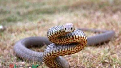 snake in house dream interpretation 1 390x220 - تعبیر خواب مار در خانه را از دیدگاه بزرگان و معبران بشنوید !!!