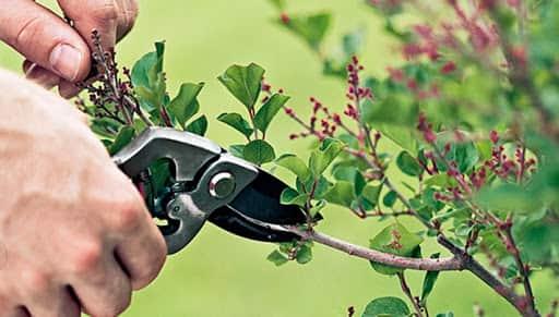 4107 - هرس کردن سالیانه درختان - گیاهان
