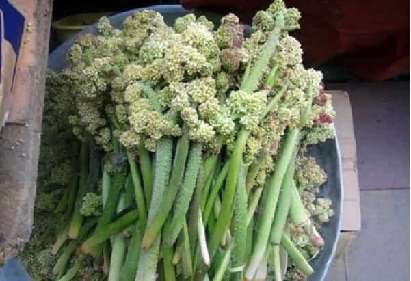 فواید و مضرات ریواس – خواص مواد غذایی – سلامت