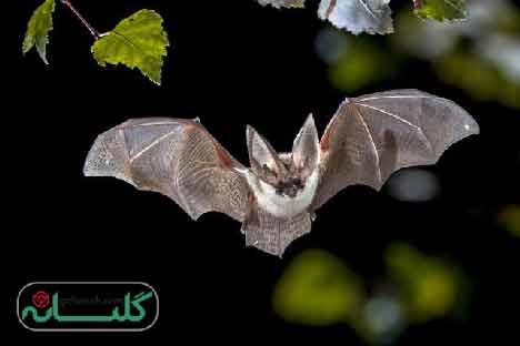 interpretation dream bat hazrat yousef 1 - تعبیر خواب خفاش حضرت یوسف