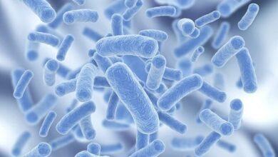 پروبیوتیک در ایران 390x220 - وضعیت صنعت پروبیوتیک در ایران
