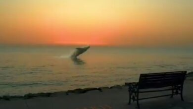 53534 914 390x220 - فیلم   پرش زیبای نهنگ در ساحل بوشهر   شایعه یا واقعیت؟