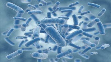 bacteria 390x220 - دانستنی های جالب درباره باکتری ها