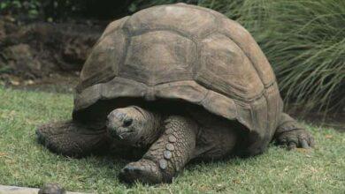 4204.1 min 390x220 - حیوانات به ترتیب طول عمر بیشتر - حیوانات