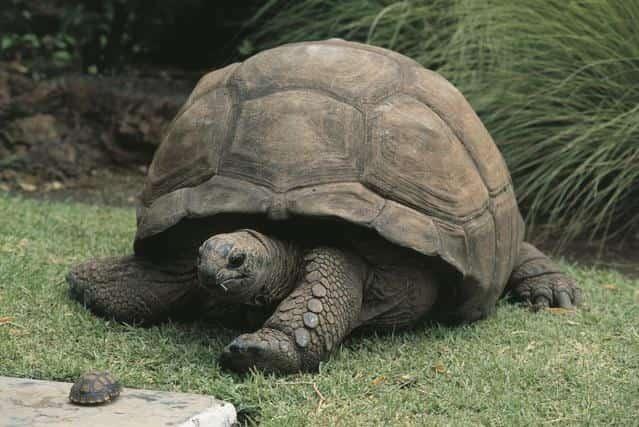 4204.1 min - حیوانات به ترتیب طول عمر بیشتر - حیوانات